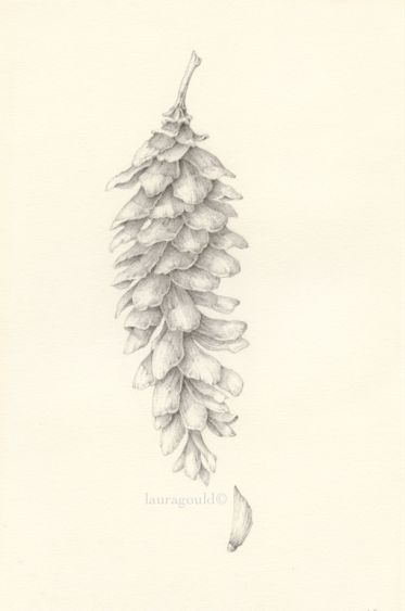 Pinecone after Smudgy - Signed limited addition Giclee $50.00 - Image size 7