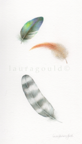 Feathers - giclee print - $35.00 image size 8