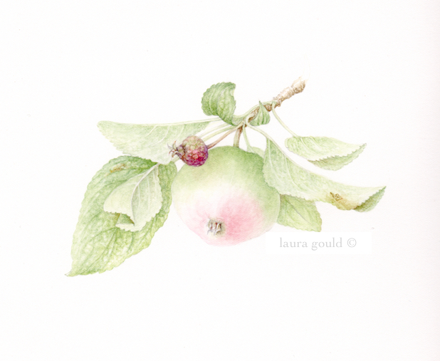 Botanical Art And Prints Barking Dog Studio