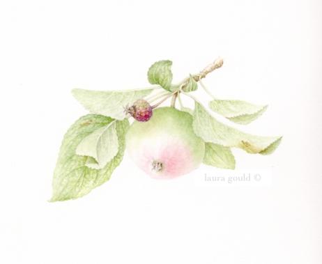Botanical Art And Prints Barking Dog Studio