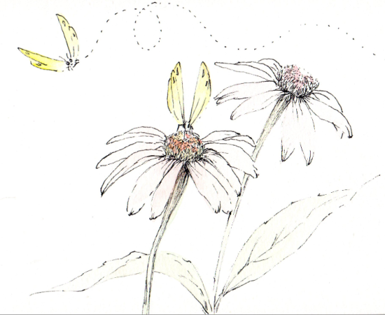 a quick drawing of mine of echinacea and butterflies....