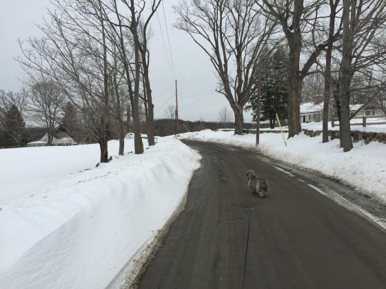 Winter walk with Ben....