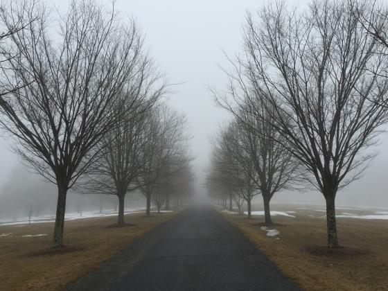 lasdon trees in fog