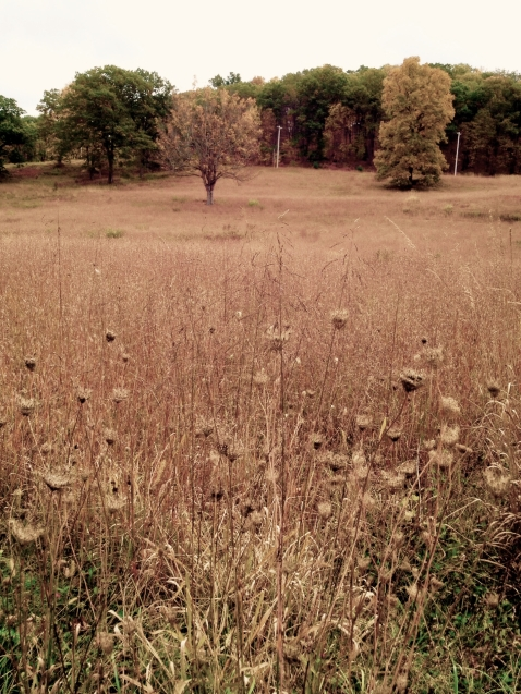Fields of grasses and Queen Ann's Lace © laura gould